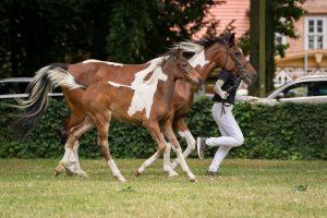 16_Pegasus x Gelsa